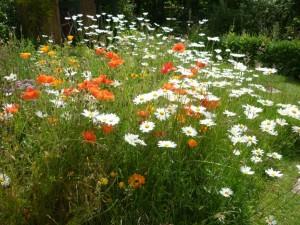 Beeline in garden 2