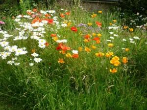 Beeline in garden